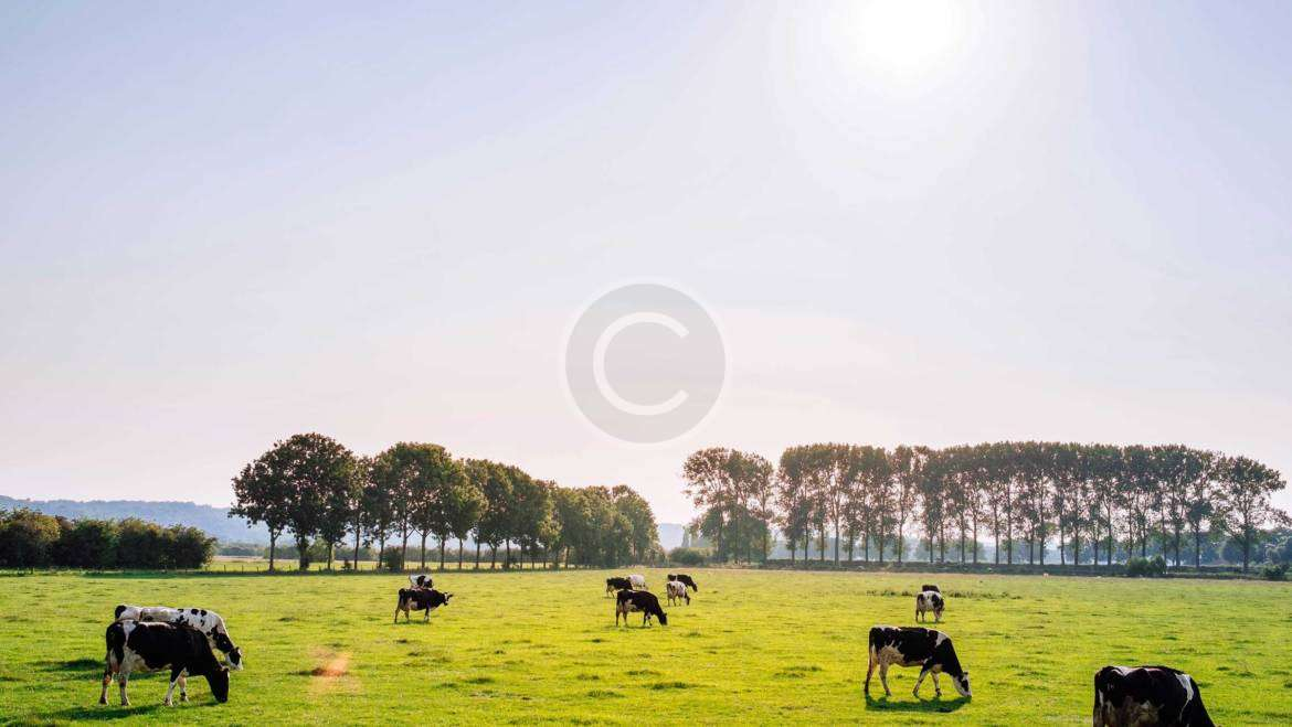 Grass Management Tips for Late Summer